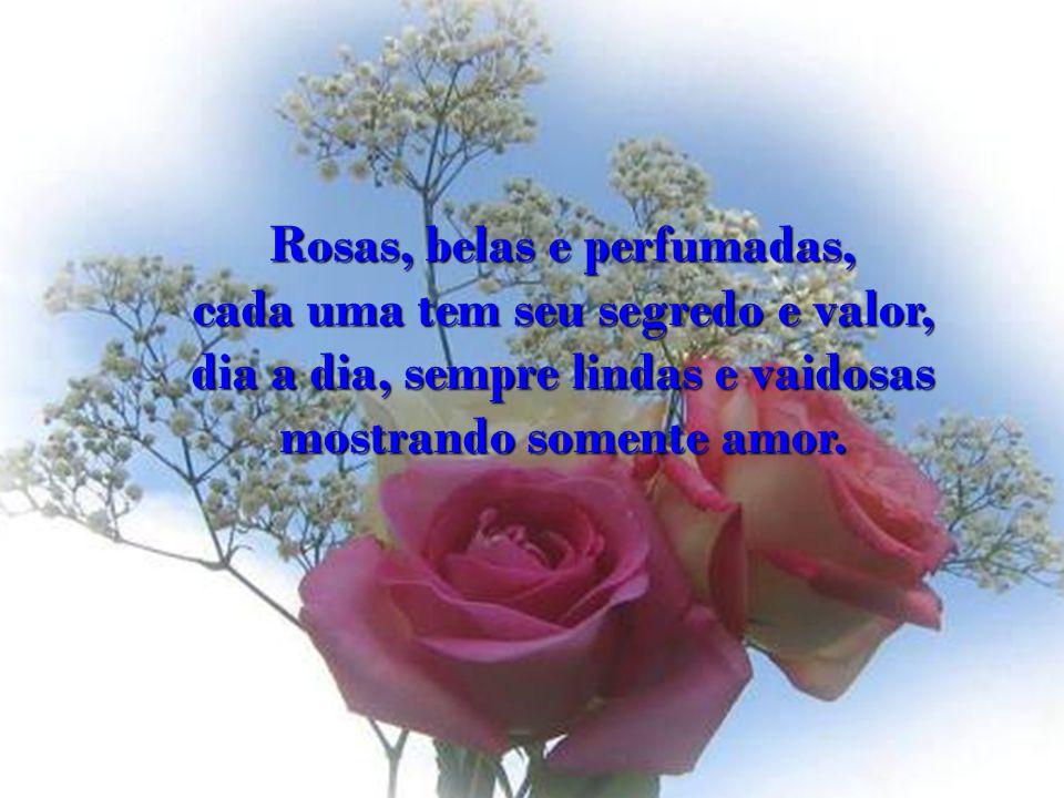 Rosas, belas e perfumadas, cada uma tem seu segredo e valor, dia a dia, sempre lindas e vaidosas mostrando somente amor.