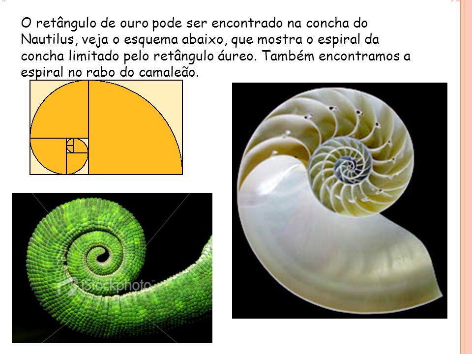 O retângulo de ouro pode ser encontrado na concha do Nautilus, veja o esquema abaixo, que mostra o espiral da concha limitado pelo retângulo áureo. Ta