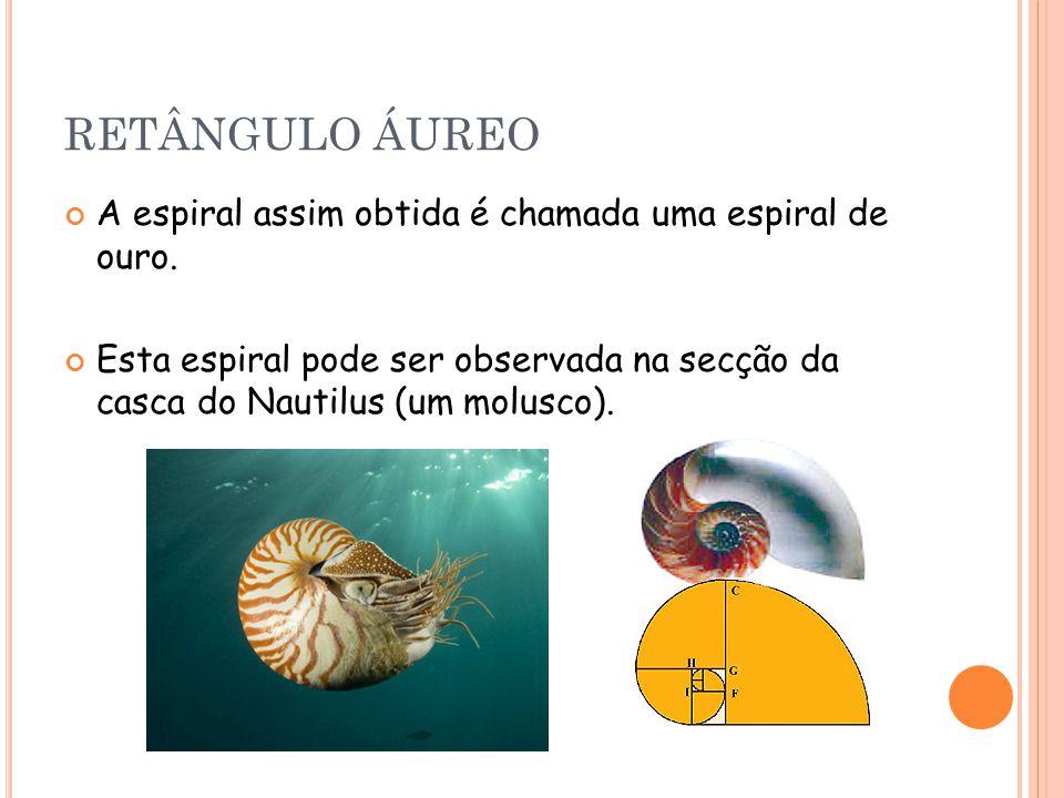 RETÂNGULO ÁUREO A espiral assim obtida é chamada uma espiral de ouro. Esta espiral pode ser observada na secção da casca do Nautilus (um molusco).