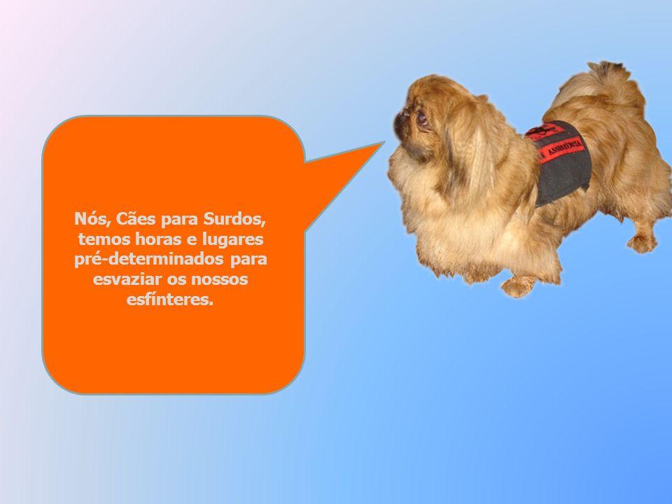 Não corras para um Surdo com um Cão de Assistência sem antes lhe chamares a atenção e, por favor, nunca me toques! Só o meu dono, para o qual trabalho