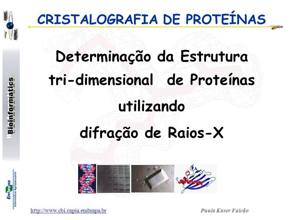 Paula Kuser Falcãohttp://www.cbi.cnpia.embrapa.br CRISTALOGRAFIA DE PROTEÍNAS Determinação da Estrutura tri-dimensional de Proteínas utilizando difraç