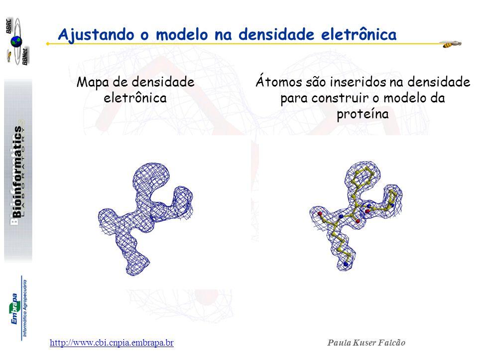 Paula Kuser Falcãohttp://www.cbi.cnpia.embrapa.br Mapa de densidade eletrônica Átomos são inseridos na densidade para construir o modelo da proteína A