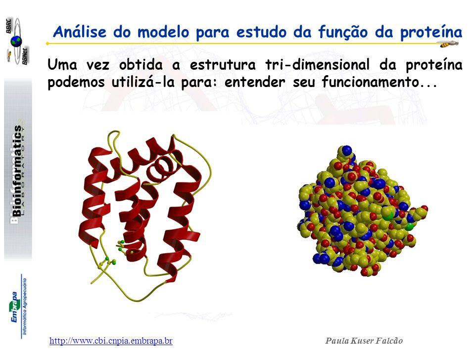 Paula Kuser Falcãohttp://www.cbi.cnpia.embrapa.br Uma vez obtida a estrutura tri-dimensional da proteína podemos utilizá-la para: entender seu funcion