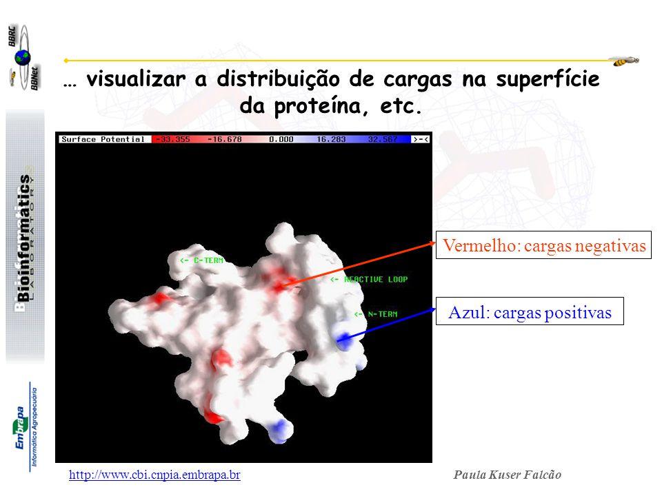 Paula Kuser Falcãohttp://www.cbi.cnpia.embrapa.br Azul: cargas positivas … visualizar a distribuição de cargas na superfície da proteína, etc. Vermelh