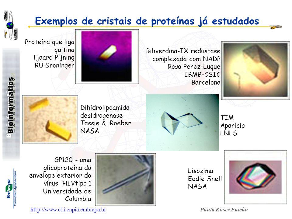 Paula Kuser Falcãohttp://www.cbi.cnpia.embrapa.br GP120 - uma glicoproteína do envelope exterior do vírus HIVtipo 1 Universidade de Columbia Proteína