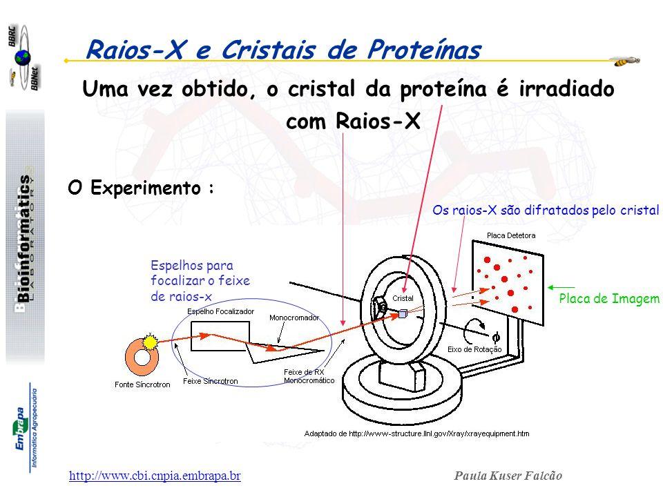 Paula Kuser Falcãohttp://www.cbi.cnpia.embrapa.br Raios-X e Cristais de Proteínas O Experimento : Uma vez obtido, o cristal da proteína é irradiado co