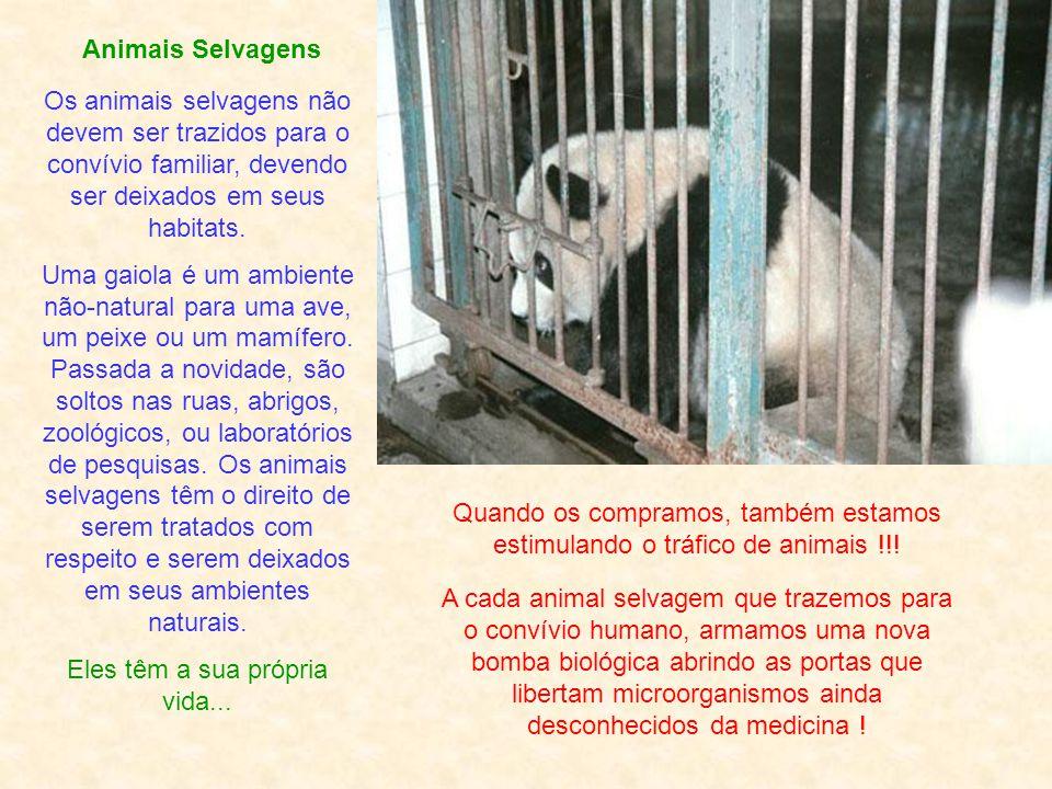 Foto: Judy Silveira Animais de Estimação Pitágoras Os animais dividem conosco o privilégio de ter uma alma. Tudo vale a pena se a alma não é pequena.