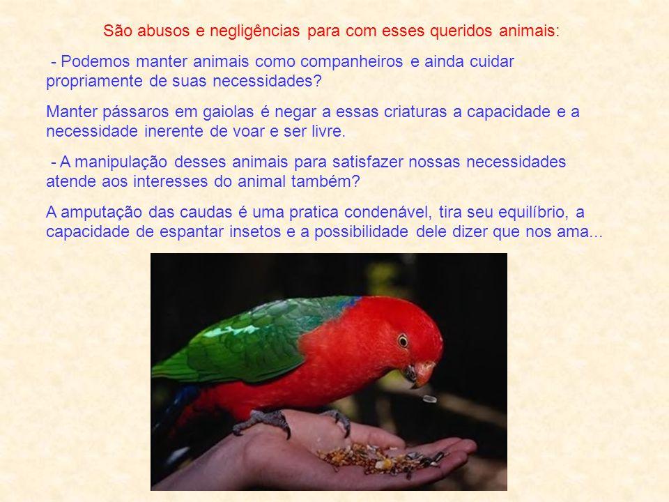 São abusos e negligências para com esses queridos animais: - Podemos manter animais como companheiros e ainda cuidar propriamente de suas necessidades.