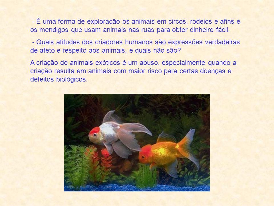 São abusos e negligências para com esses queridos animais: - Podemos manter animais como companheiros e ainda cuidar propriamente de suas necessidades