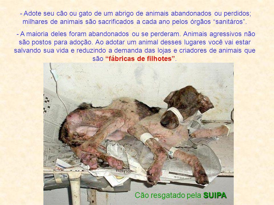 - Adote seu cão ou gato de um abrigo de animais abandonados ou perdidos; milhares de animais são sacrificados a cada ano pelos órgãos sanitáros.