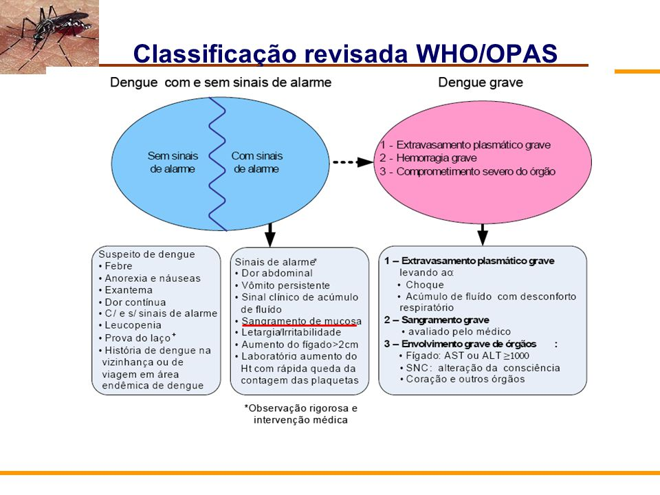 Classificação revisada WHO/OPAS