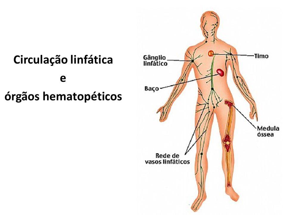 Circulação linfática e órgãos hematopéticos
