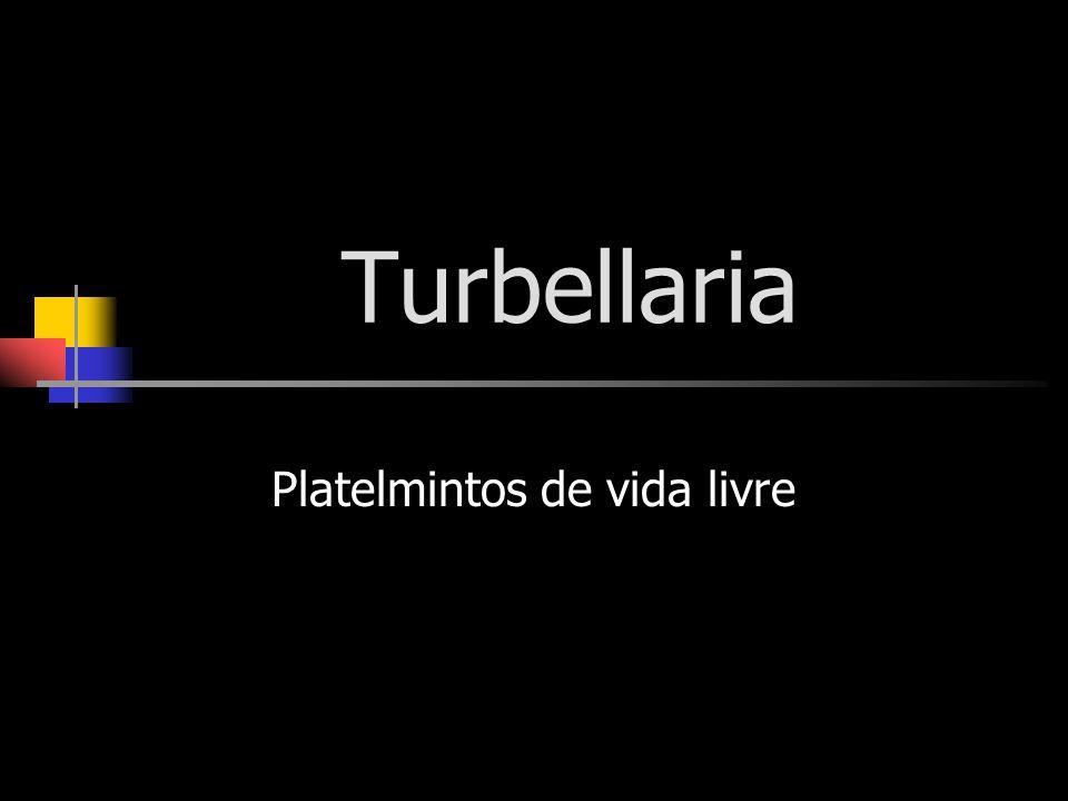 Turbellaria Platelmintos de vida livre