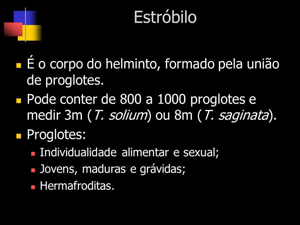 Estróbilo É o corpo do helminto, formado pela união de proglotes. Pode conter de 800 a 1000 proglotes e medir 3m (T. solium) ou 8m (T. saginata). Prog