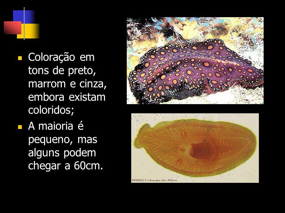 São primariamente aquáticos e a maioria marinha; Os terrestres estão associados a ambientes úmidos;