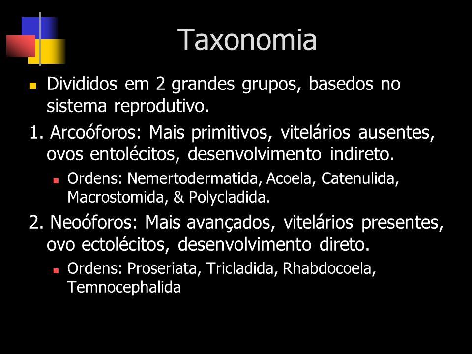 Taxonomia Divididos em 2 grandes grupos, basedos no sistema reprodutivo. 1. Arcoóforos: Mais primitivos, vitelários ausentes, ovos entolécitos, desenv