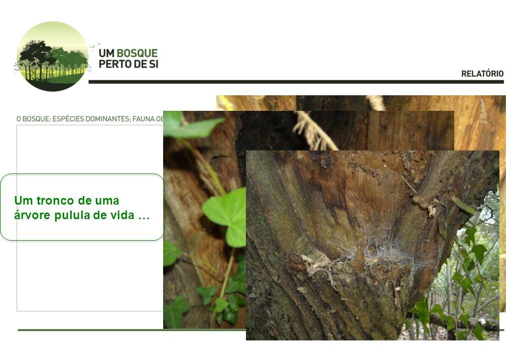Um tronco de uma árvore pulula de vida …