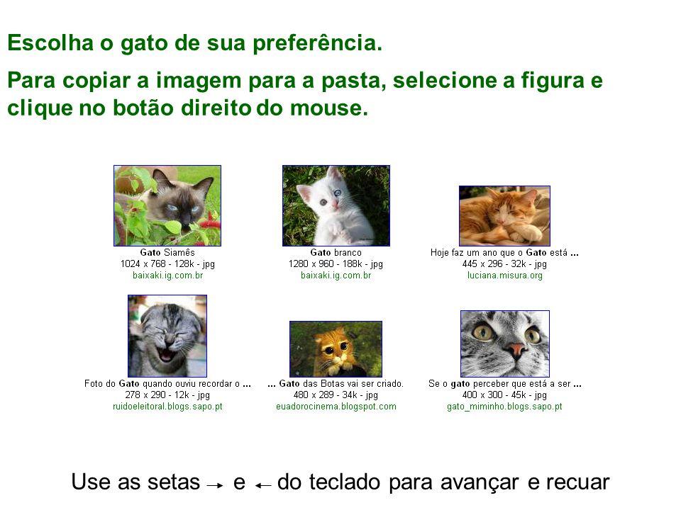 Use as setas e do teclado para avançar e recuar Escolha o gato de sua preferência.