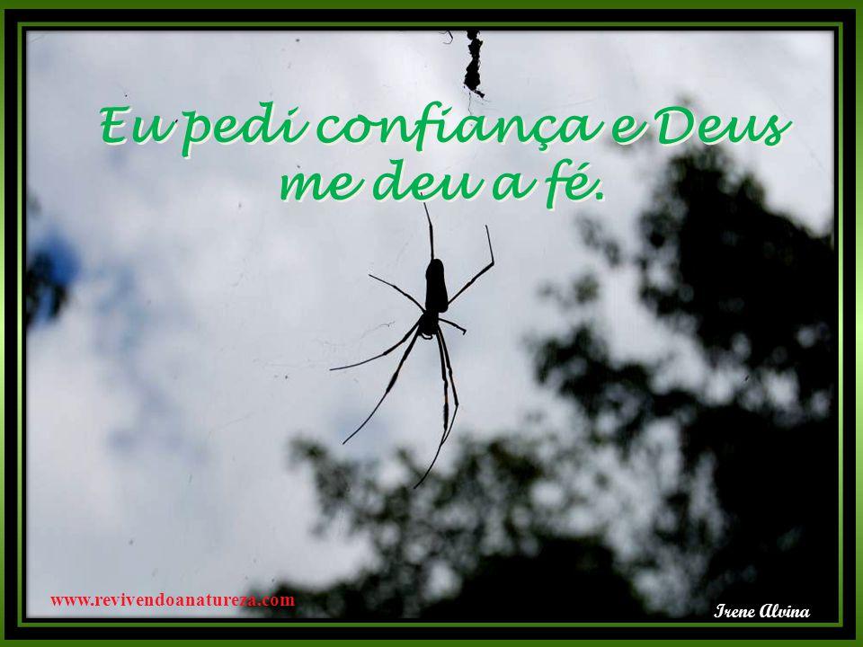 Eu pedi confiança e Deus me deu a fé. Eu pedi confiança e Deus me deu a fé. Irene Alvina www.revivendoanatureza.com