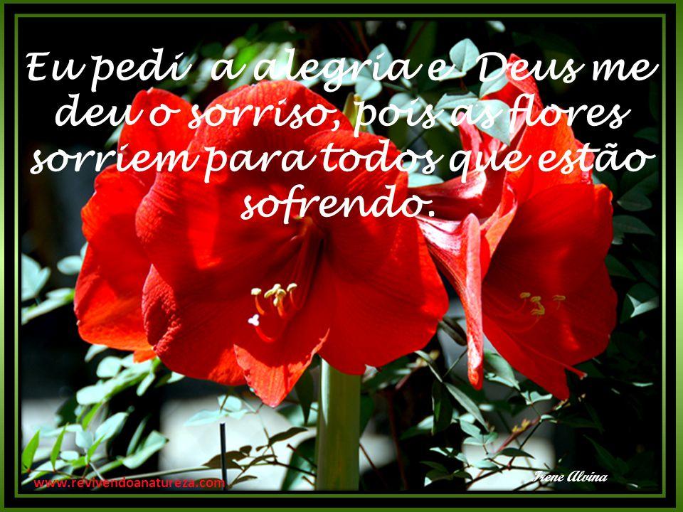 Eu pedi a alegria e Deus me deu o sorriso, pois as flores sorriem para todos que estão sofrendo. Irene Alvina