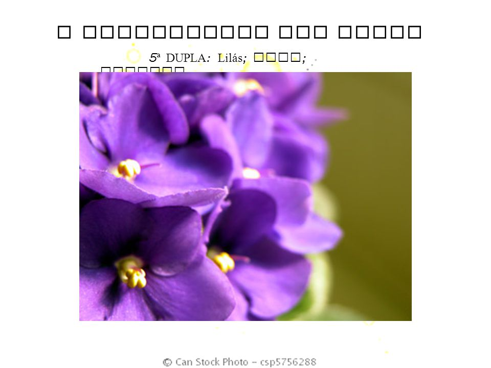 O SIGNIFICADO DAS CORES 5 ª DUPLA : Lil á s ; Anil ; Violeta