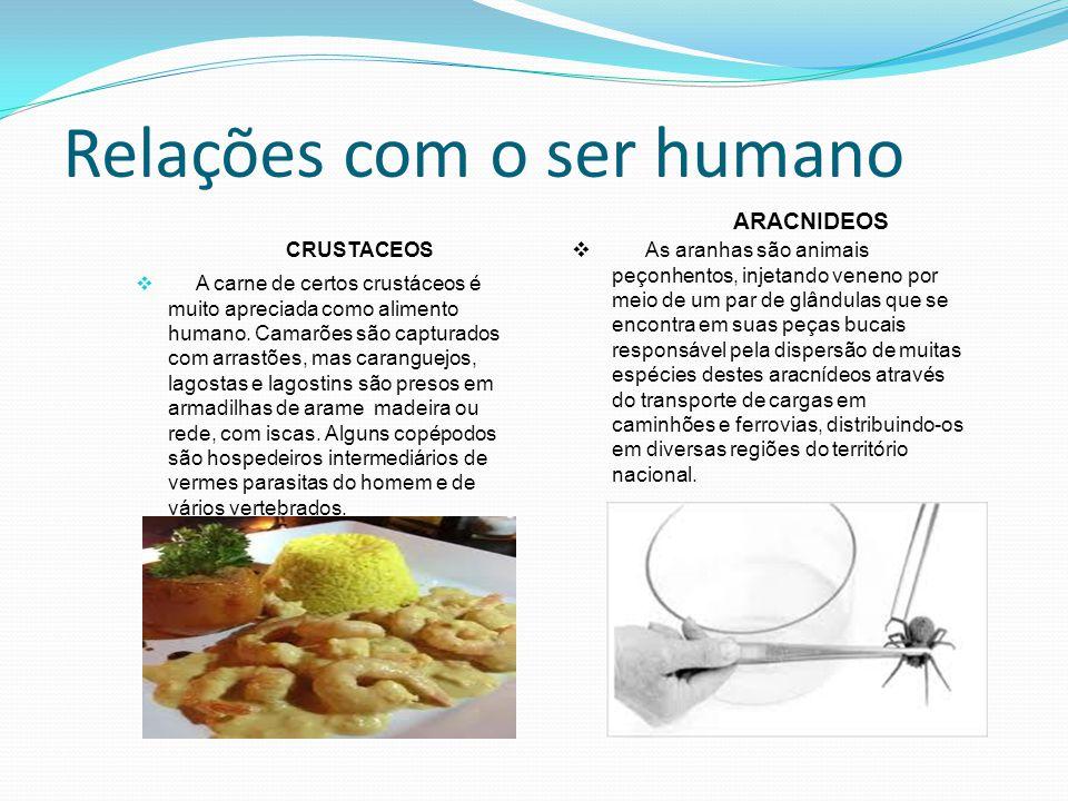 Relações com o ser humano CRUSTACEOS A carne de certos crustáceos é muito apreciada como alimento humano.