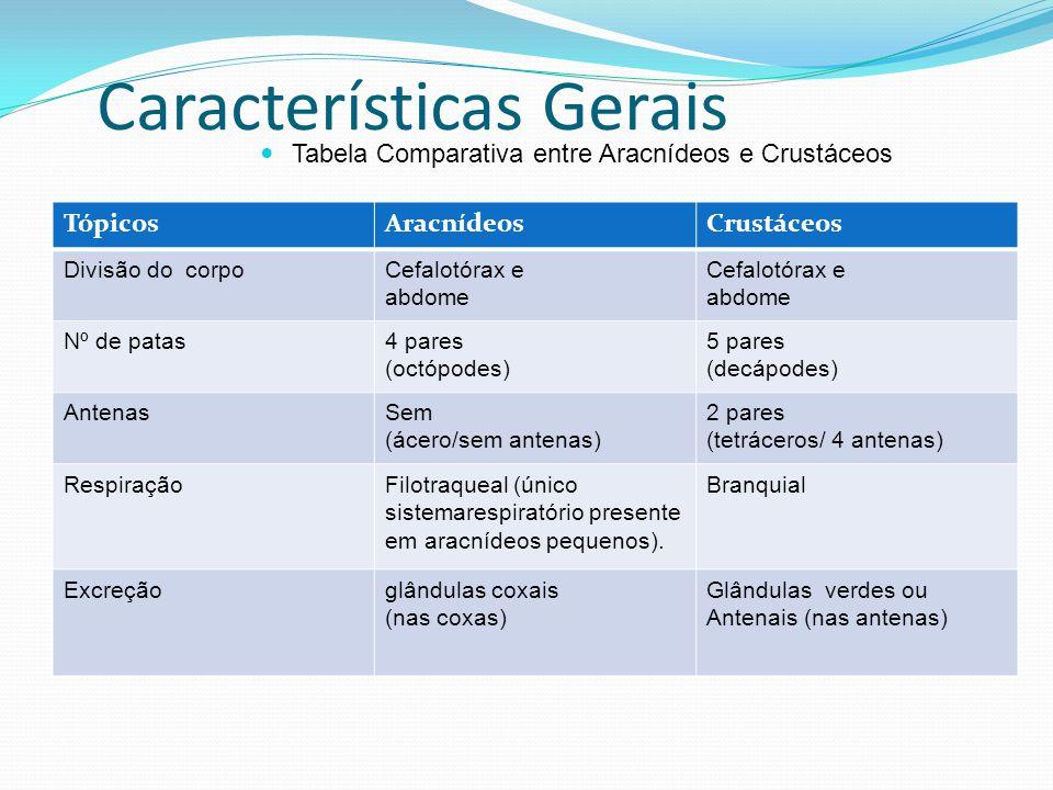 Características Gerais Tabela Comparativa entre Aracnídeos e Crustáceos TópicosAracnídeosCrustáceos Divisão do corpoCefalotórax e abdome Cefalotórax e abdome Nº de patas4 pares (octópodes) 5 pares (decápodes) AntenasSem (ácero/sem antenas) 2 pares (tetráceros/ 4 antenas) RespiraçãoFilotraqueal (único sistemarespiratório presente em aracnídeos pequenos).
