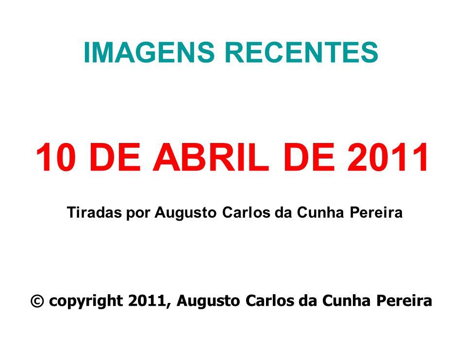 IMAGENS RECENTES 10 DE ABRIL DE 2011 Tiradas por Augusto Carlos da Cunha Pereira © copyright 2011, Augusto Carlos da Cunha Pereira