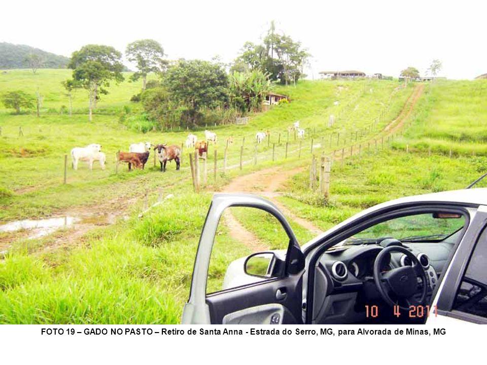FOTO 19 – GADO NO PASTO – Retiro de Santa Anna - Estrada do Serro, MG, para Alvorada de Minas, MG