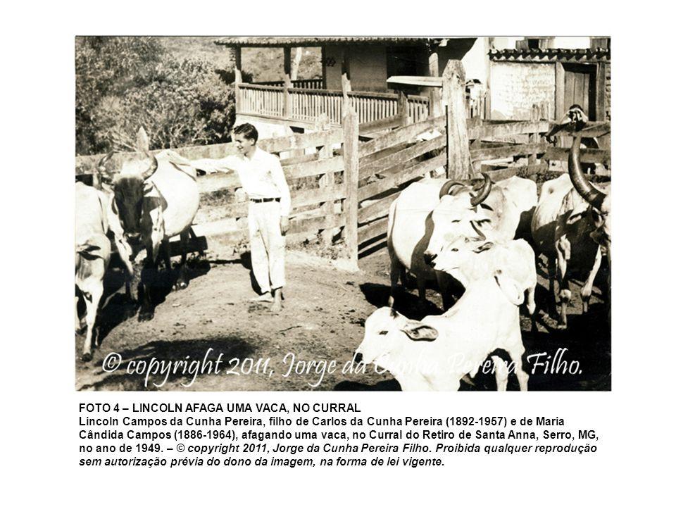 FOTO 4 – LINCOLN AFAGA UMA VACA, NO CURRAL Lincoln Campos da Cunha Pereira, filho de Carlos da Cunha Pereira (1892-1957) e de Maria Cândida Campos (18