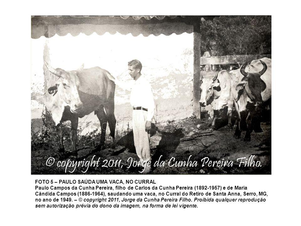 FOTO 5 – PAULO SAÚDA UMA VACA, NO CURRAL Paulo Campos da Cunha Pereira, filho de Carlos da Cunha Pereira (1892-1957) e de Maria Cândida Campos (1886-1