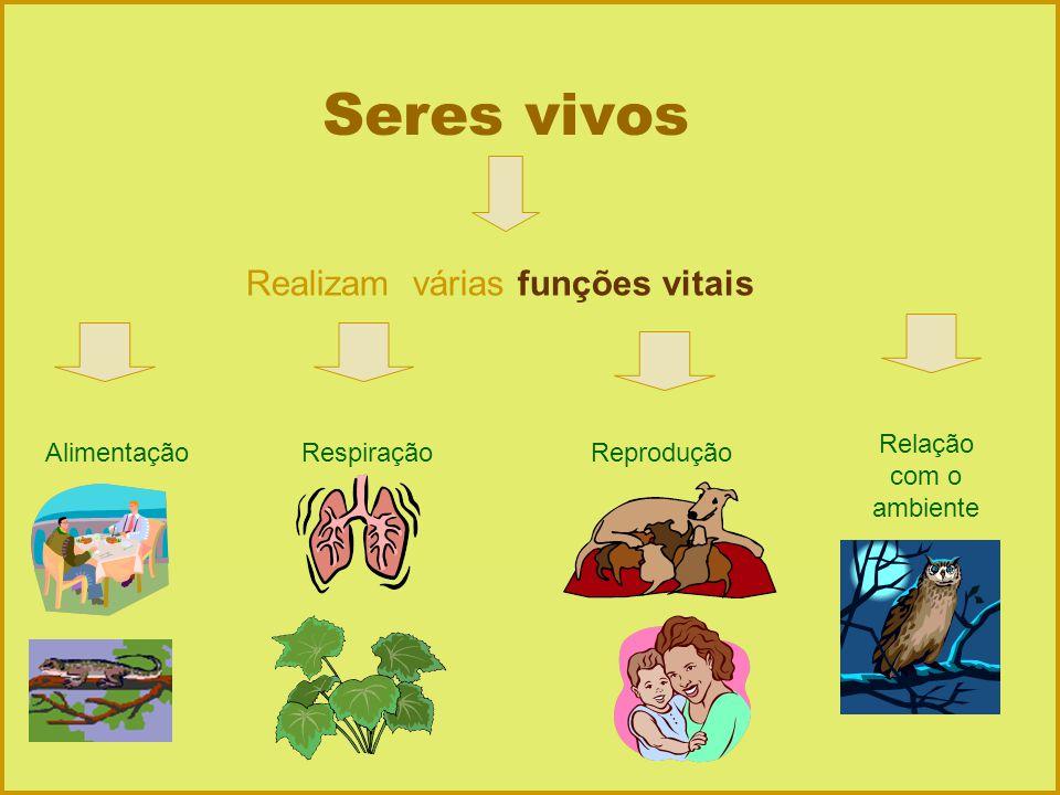 Seres vivos Realizam várias funções vitais AlimentaçãoReproduçãoRespiração Relação com o ambiente