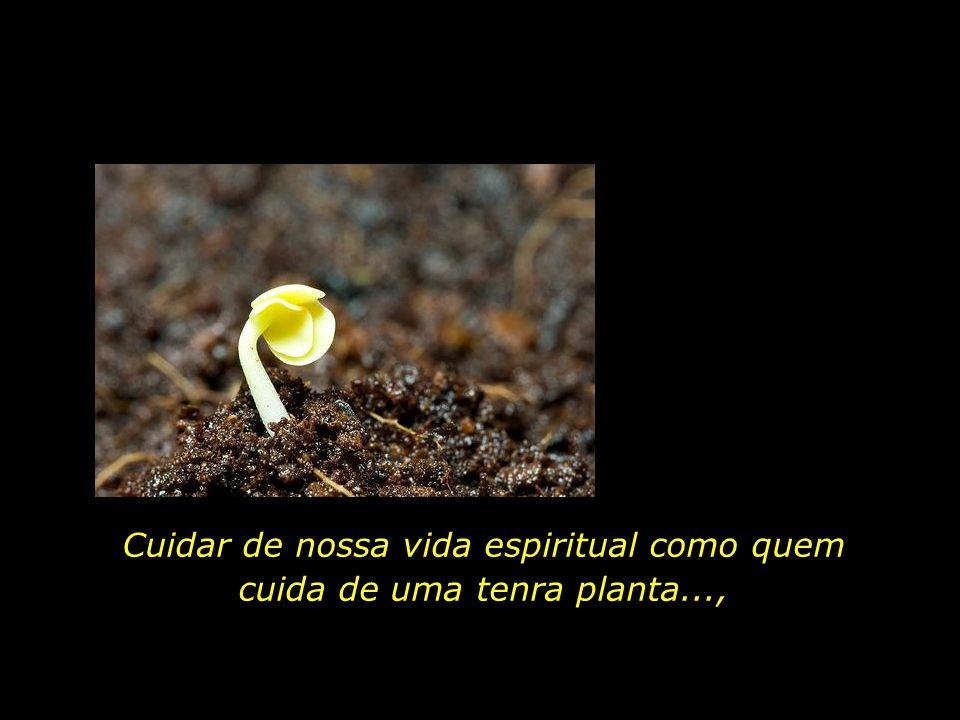 Privadas de luz exterior, as plantas desfalecem. Sem a luz interior, desfalecerá o nosso espírito...