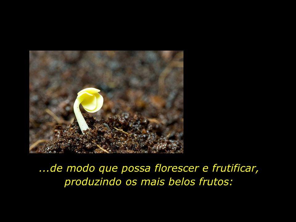 Cuidar de nossa vida espiritual como quem cuida de uma tenra planta...,