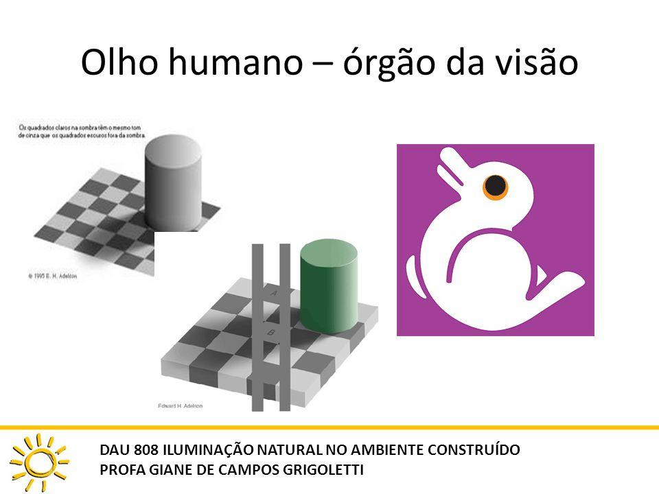 Olho humano – órgão da visão DAU 808 ILUMINAÇÃO NATURAL NO AMBIENTE CONSTRUÍDO PROFA GIANE DE CAMPOS GRIGOLETTI