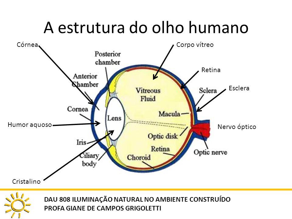 A estrutura do olho humano DAU 808 ILUMINAÇÃO NATURAL NO AMBIENTE CONSTRUÍDO PROFA GIANE DE CAMPOS GRIGOLETTI Córnea Humor aquoso Cristalino Corpo vít
