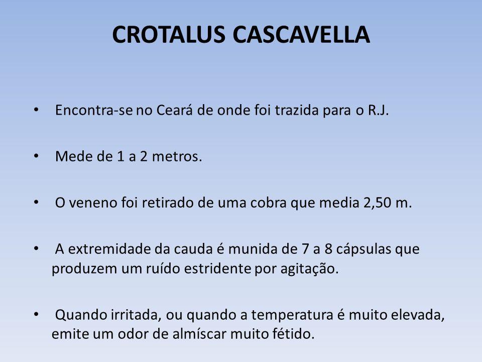 CROTALUS CASCAVELLA Anais da Academia Brasileira de Ciências vol.74 no.1 Rio de Janeiro Mar.