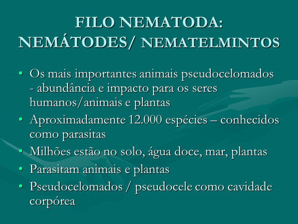 FILO NEMATODA: NEMÁTODES/ NEMATELMINTOS Os mais importantes animais pseudocelomados - abundância e impacto para os seres humanos/animais e plantasOs m