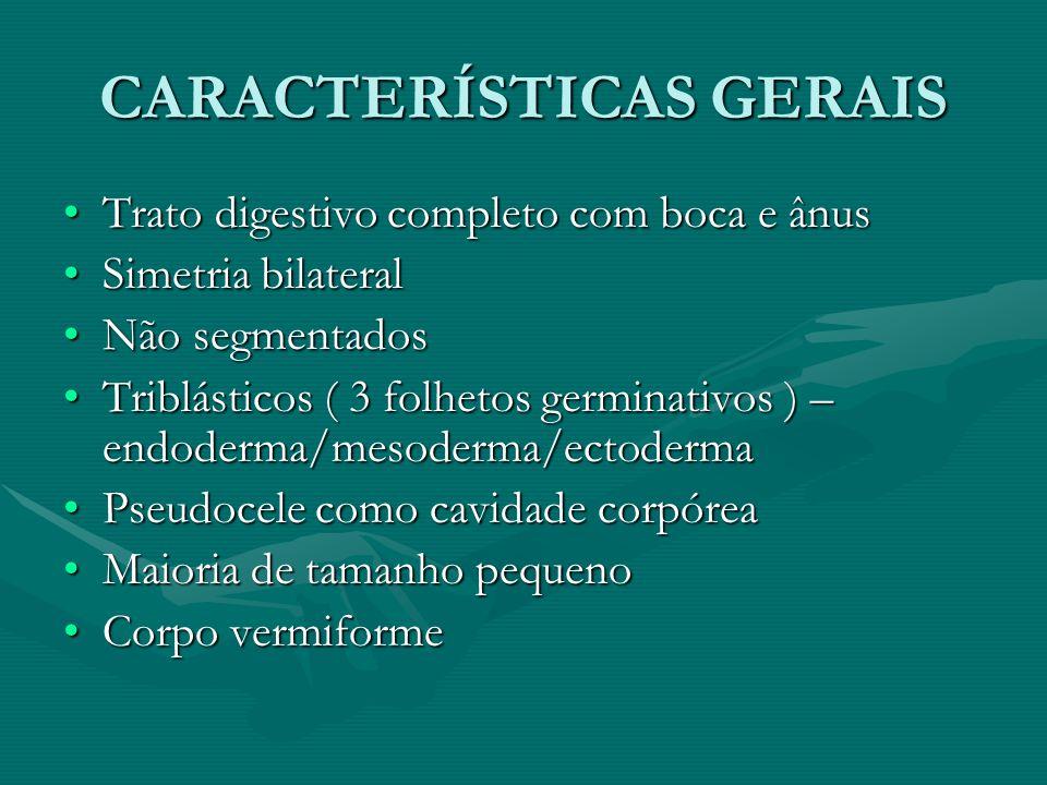 CARACTERÍSTICAS GERAIS Trato digestivo completo com boca e ânusTrato digestivo completo com boca e ânus Simetria bilateralSimetria bilateral Não segme