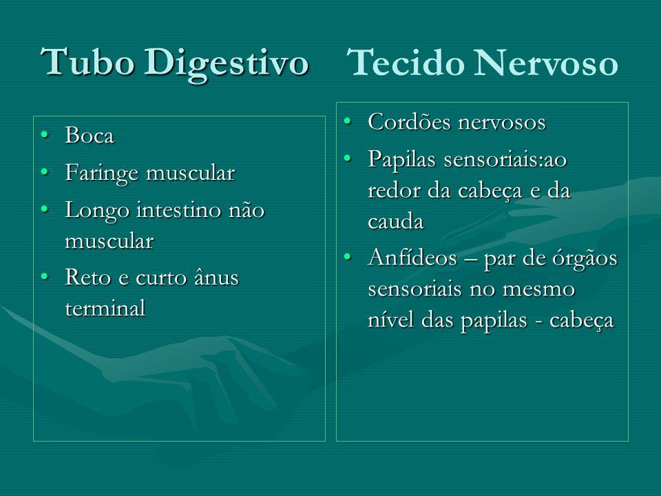 Tubo Digestivo BocaBoca Faringe muscularFaringe muscular Longo intestino não muscularLongo intestino não muscular Reto e curto ânus terminalReto e cur