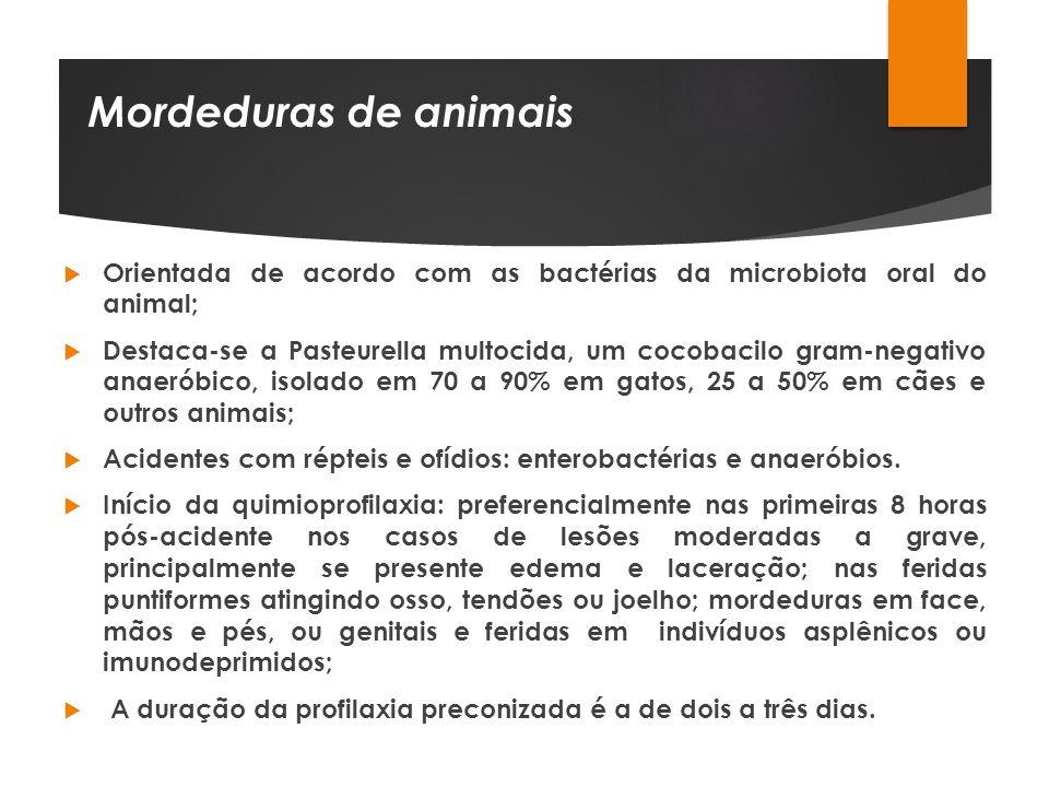 Mordeduras de animais Orientada de acordo com as bactérias da microbiota oral do animal; Destaca-se a Pasteurella multocida, um cocobacilo gram-negati
