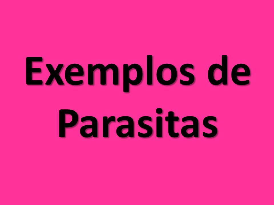 Pulgas As pulgas são parasitas externos que se alimentam do sangue de mamíferos e aves, seus hospedeiros.