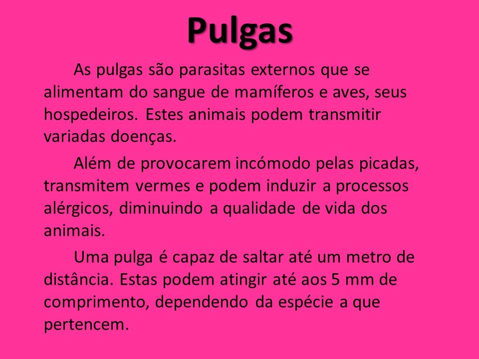 Pulgas As pulgas são parasitas externos que se alimentam do sangue de mamíferos e aves, seus hospedeiros. Estes animais podem transmitir variadas doen