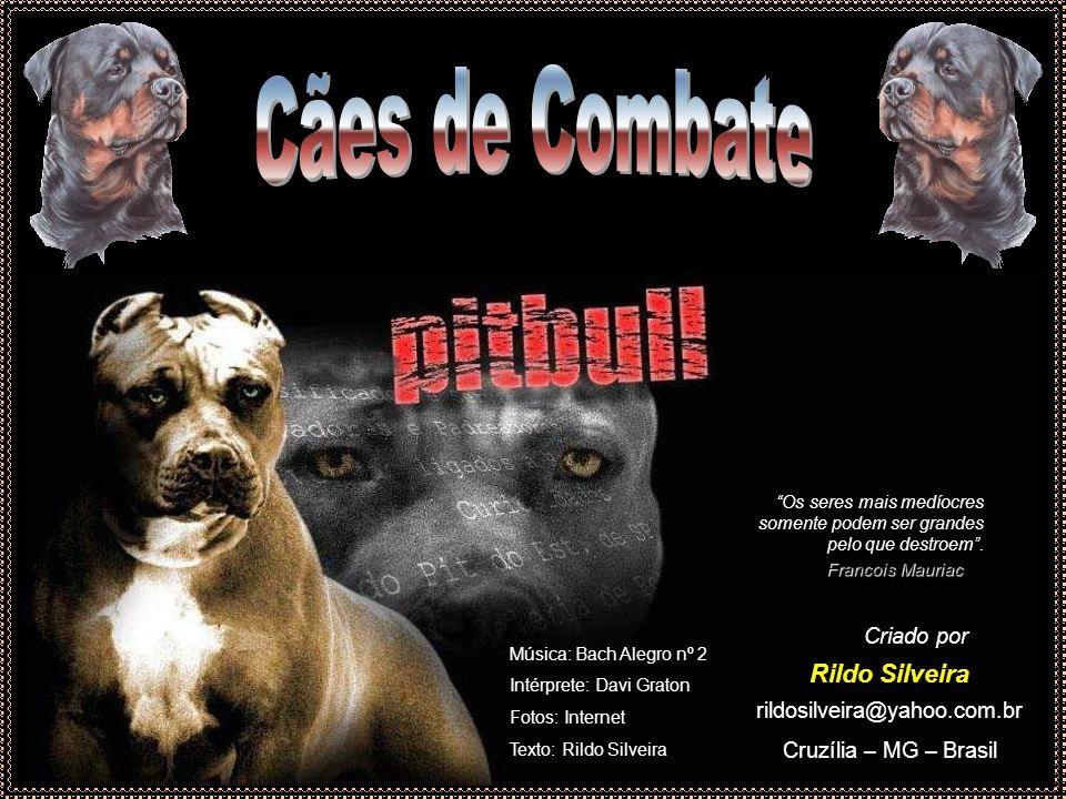 Essas raças caninas são vítimas do comportamento de alguns humanos.