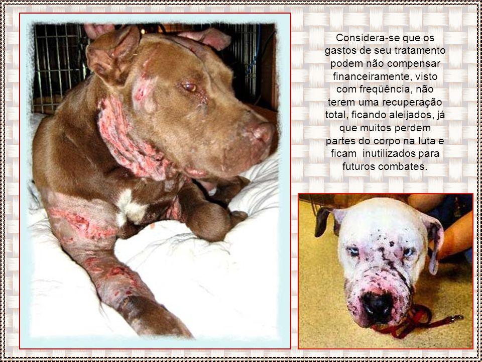 Os animais, derrotados perdem sua utilidade para as rinhas e devido a perda na aposta, seus donos descarregam sua raiva nos cães, espancando e matando