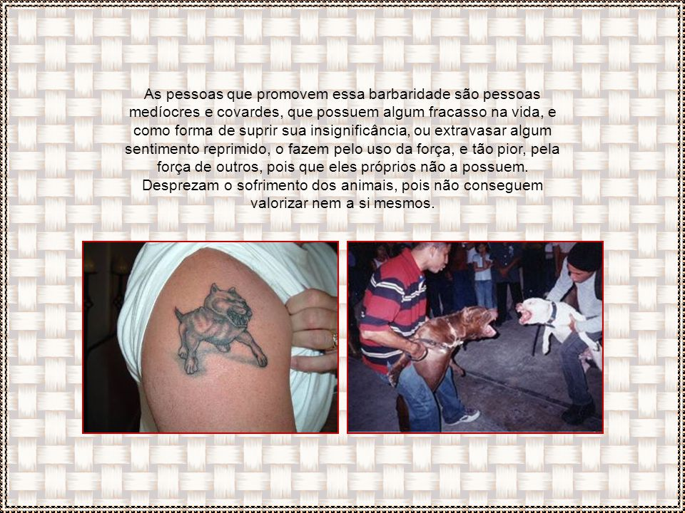 Os combates de cães revelam um lado escuro e ganancioso do homem: o gosto pela violência!