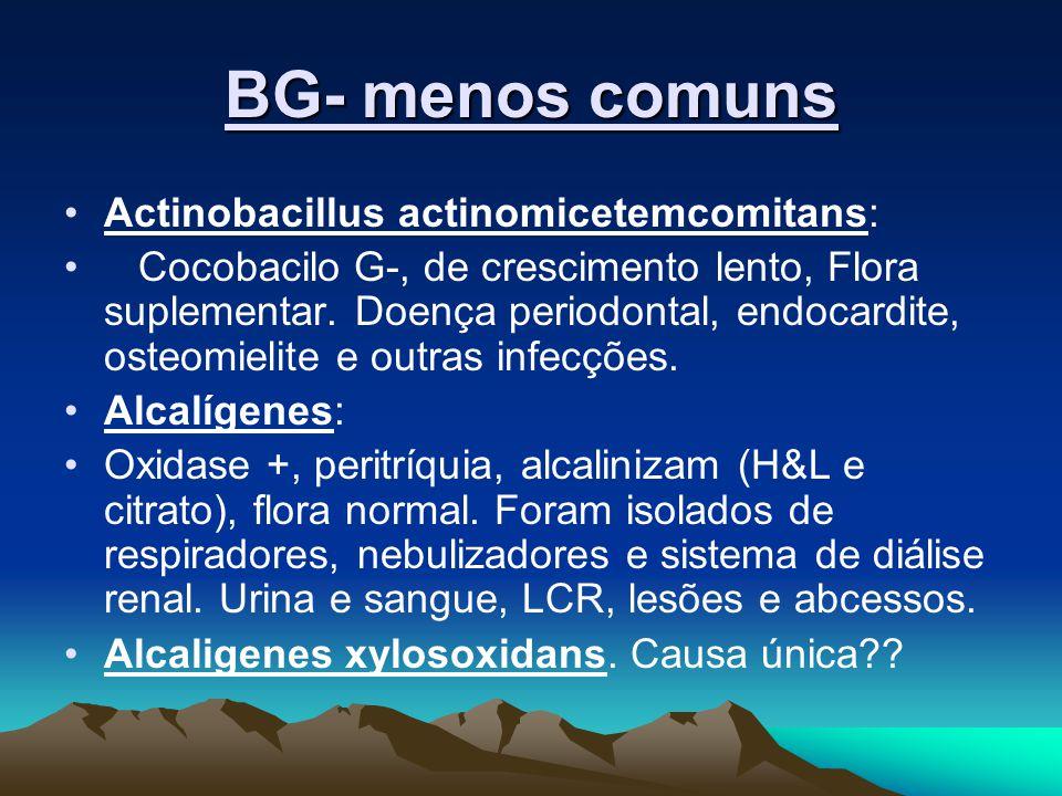 BG- menos comuns Actinobacillus actinomicetemcomitans: Cocobacilo G-, de crescimento lento, Flora suplementar. Doença periodontal, endocardite, osteom