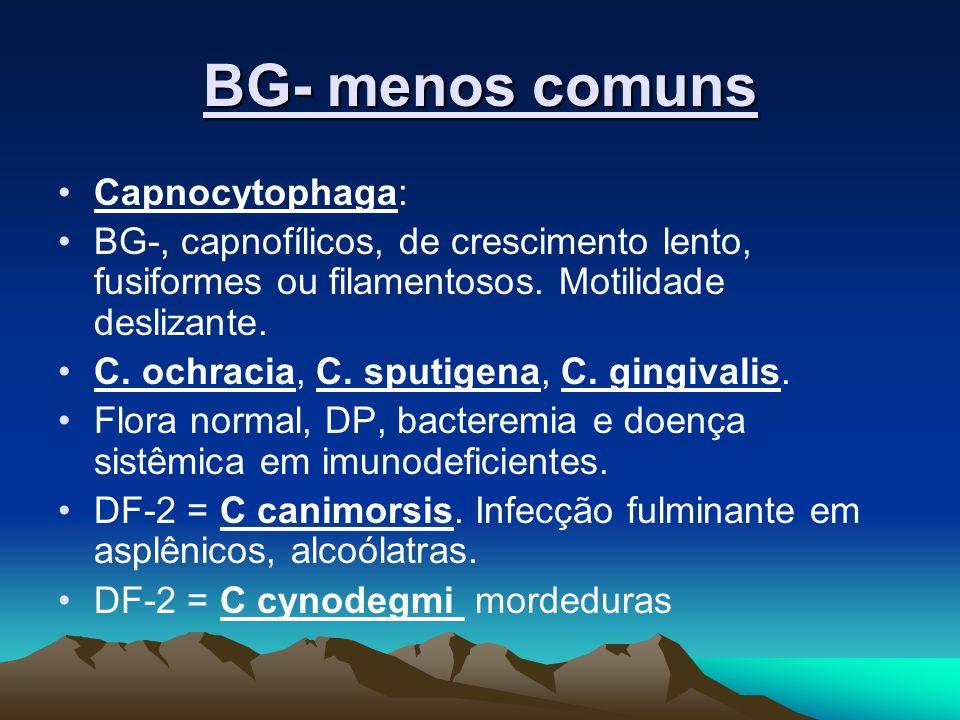 BG- menos comuns Capnocytophaga: BG-, capnofílicos, de crescimento lento, fusiformes ou filamentosos. Motilidade deslizante. C. ochracia, C. sputigena