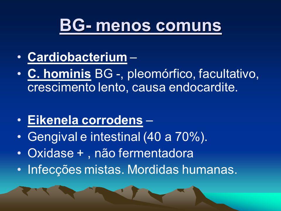 BG- menos comuns Cardiobacterium – C. hominis BG -, pleomórfico, facultativo, crescimento lento, causa endocardite. Eikenela corrodens – Gengival e in
