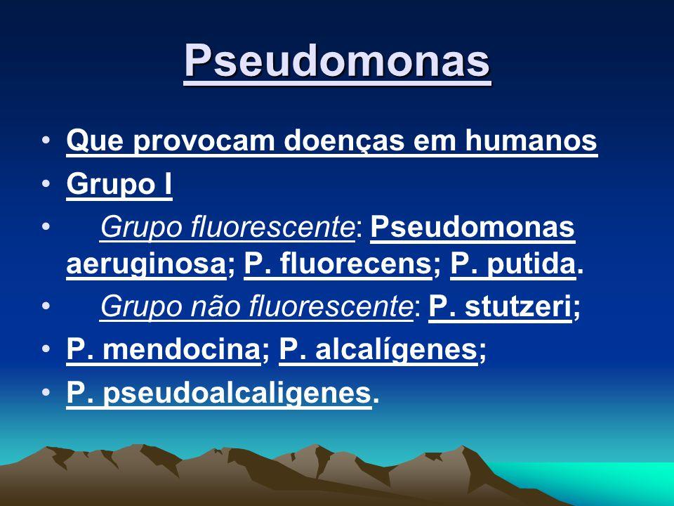 Pseudomonas Que provocam doenças em humanos Grupo I Grupo fluorescente: Pseudomonas aeruginosa; P. fluorecens; P. putida. Grupo não fluorescente: P. s